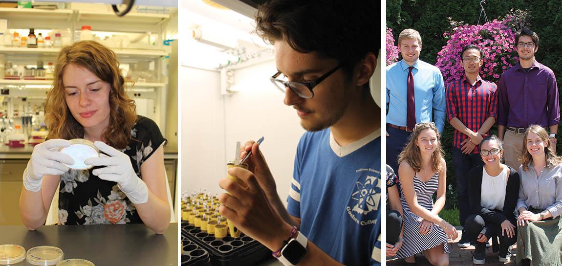 Msu Summer 2020.Summer Undergraduate Research Program Msu Great Lakes