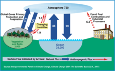 Carbon Pools and Fluxes