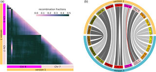 Correction of misassembled region in the version 1 sorghum reference genome assembly and integration of new sequence.