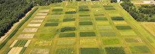 Aerial view of GLBRC KBS LTER cellulosic biofuels research experiment